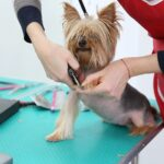 how short should dog nails be